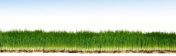 grass-roots-header